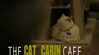 Jalan-jalan Sore Episode The Cat Cabin