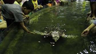 Pengunjung memadati area Seaworld, di Taman Impian Jaya Ancol, Jakarta, Rabu (28/6). [Suara.com/Oke Atmaja]