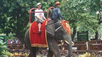 40 Ribu Pengunjung Nikmati Libur Tahun Baru di Kebun Binatang Surabaya