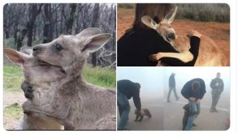 Foto Pray for Australia Bikin Nangis, Video Viral Angkot Terobos Banjir