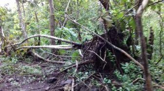 Rusak Hutan, Wakil Ketua DPRD Takalar Dijerat Pidana Berlapis