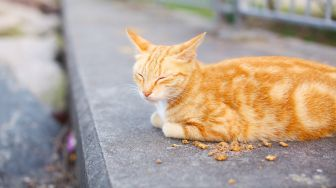 Warganet Takjub, Kucing Oren Lawan Ular Disamakan dengan Panji Petualang