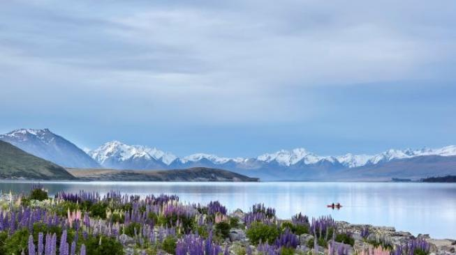 Lake Tekapo di Selandia Baru. (Tourism New Zealand)