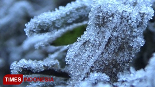 Frozen Bromo. [TIMES Indonesia]