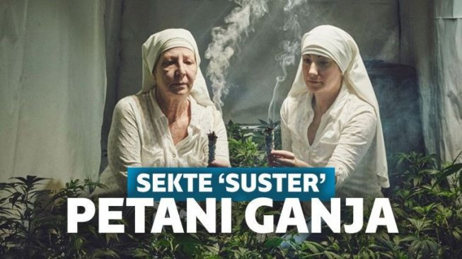 The Sisters of the Valley, Sekte 'Suster' yang Berbisnis Ganja