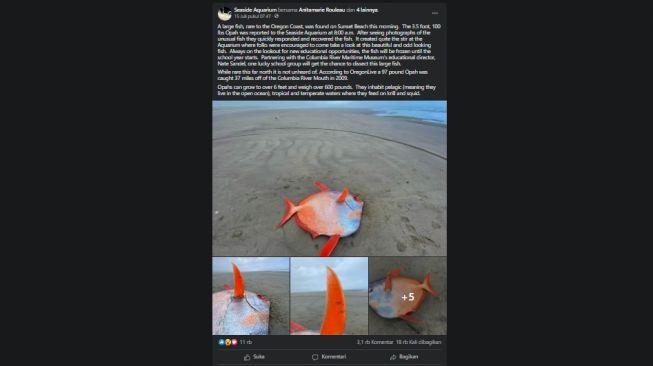 Ikan Opah, Moonfish. [Facebook/Seaside Aquarium]