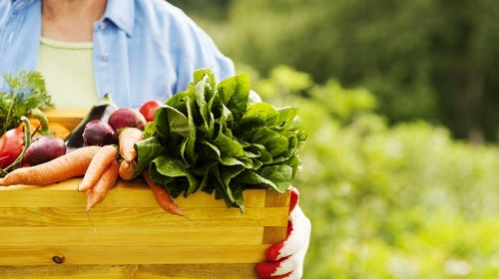 Pola Makan Sehat dan Keseimbangan Gizi untuk Meningkatkan imunitas