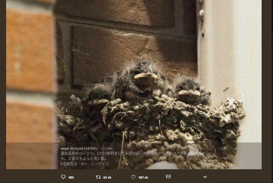 Demi Selamatkan Burung, Toko Ini Rela Matikan Lampu Saat Malam Hari. (Twitter/Unya41447845)