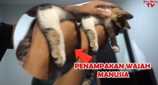 Kucing Rieta Amilia [Youtube]